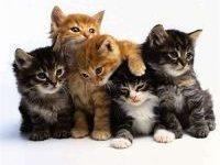 Красивые кошачьи имена для мальчиков