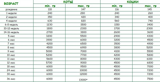 вес британского котенка по месяцам таблица