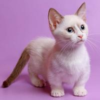 порода кошки с короткими лапами
