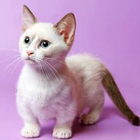 ассоциация породы кошки манчкин