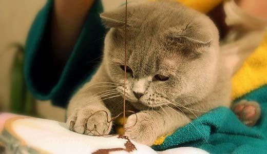 Клички для кота на ф