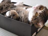 Кот мару — фото, видео