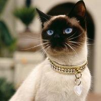 какая родина у сиамских кошек