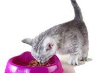 Чем кормить шотландского котенка в 2 месяца?