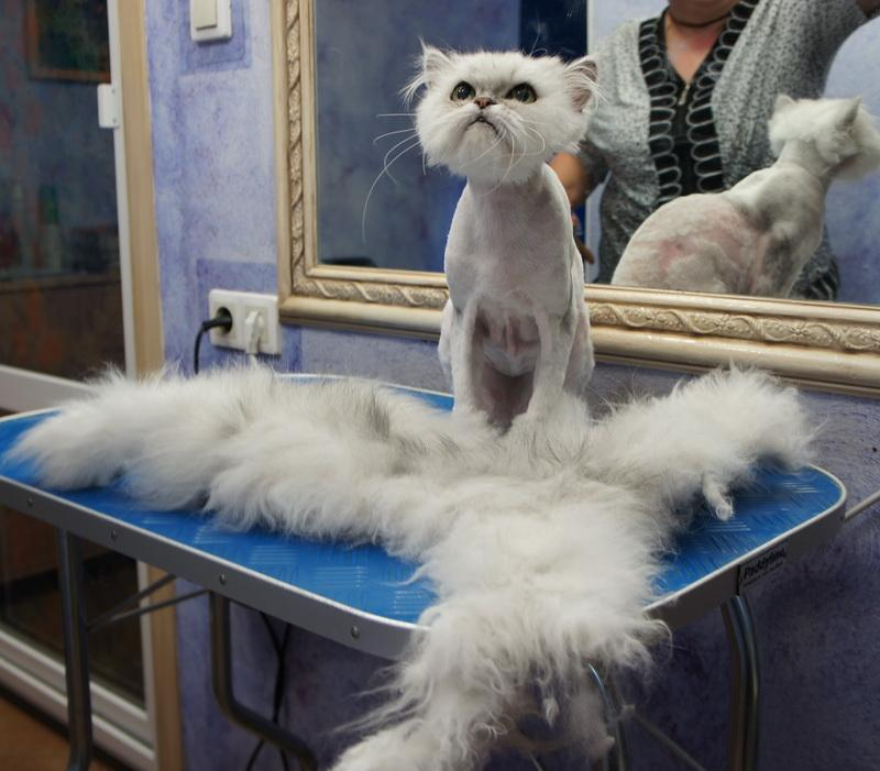 Cтрижка груминг кошек