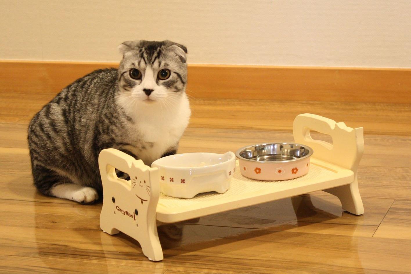 как правильно кормить кота