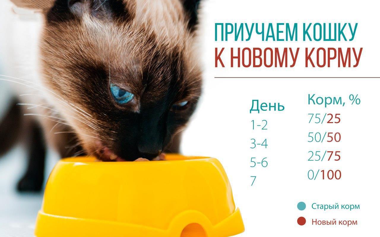 как приучить кошку к новому корму