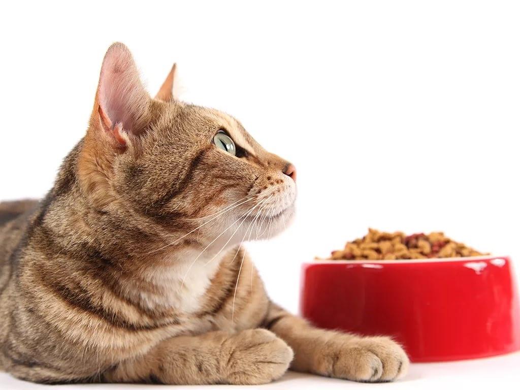 корм экономкласс для кошек
