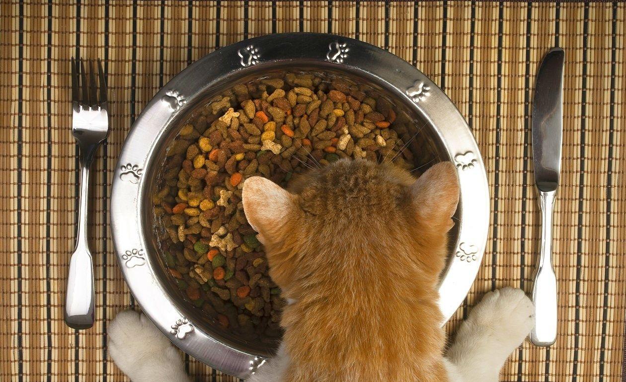 виды корма для кошек