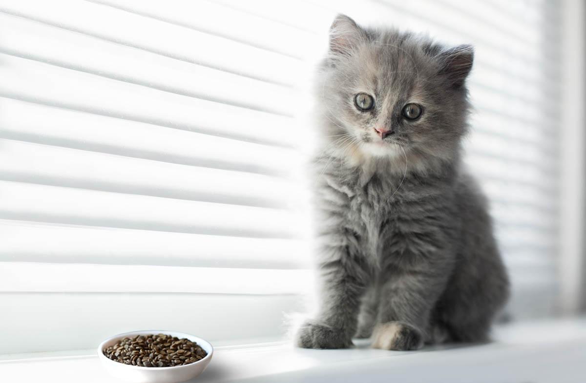 какой корм для котят выбрать