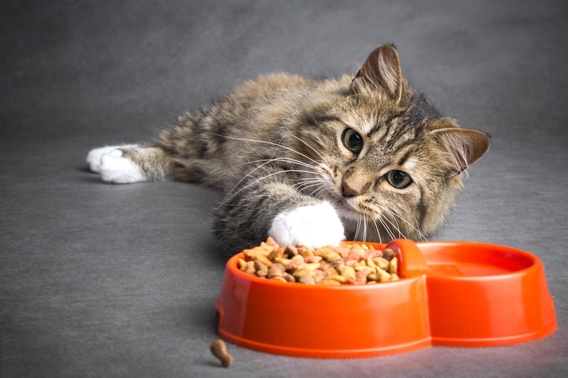 корм для кошек как выбрать